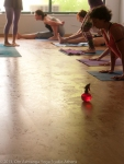 Ashtanga Yoga Memorial Day@Om Ashtanga Yoga Studio Athens-21