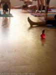 Ashtanga Yoga Memorial Day@Om Ashtanga Yoga Studio Athens-22