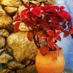 Om Studio| Ashtanga Yoga  Athens| Inland Retreat 2014-25